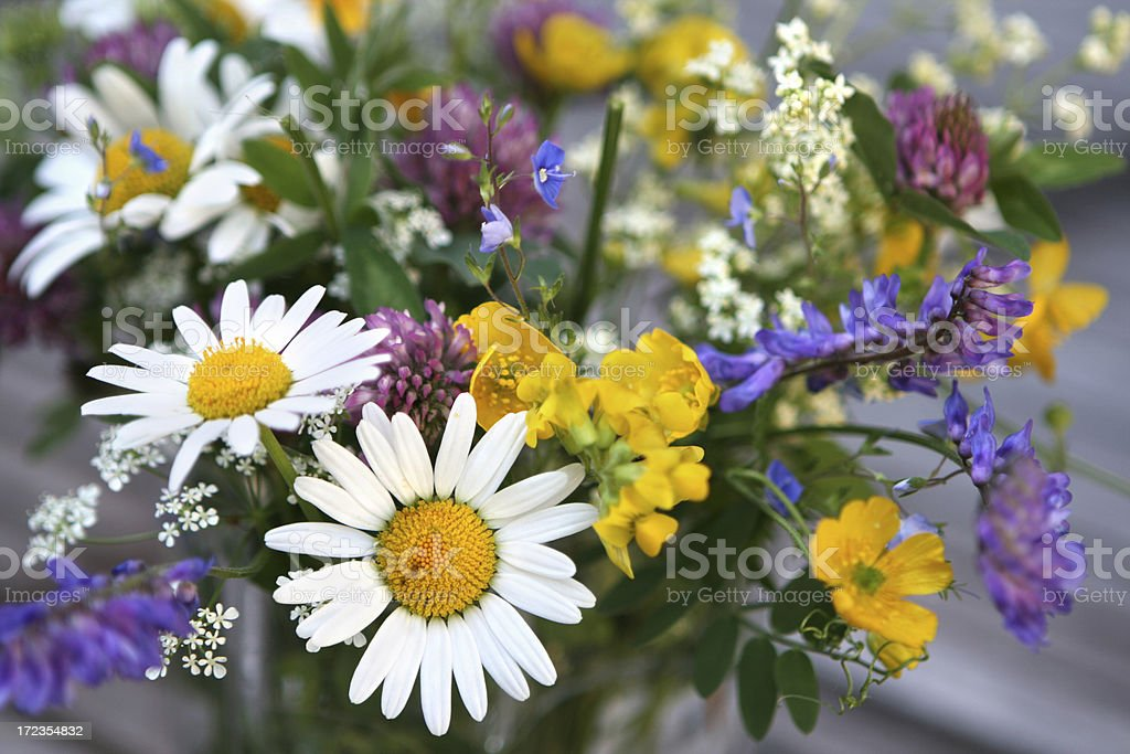 Bouquet of wild flowers in Norway royalty-free stock photo