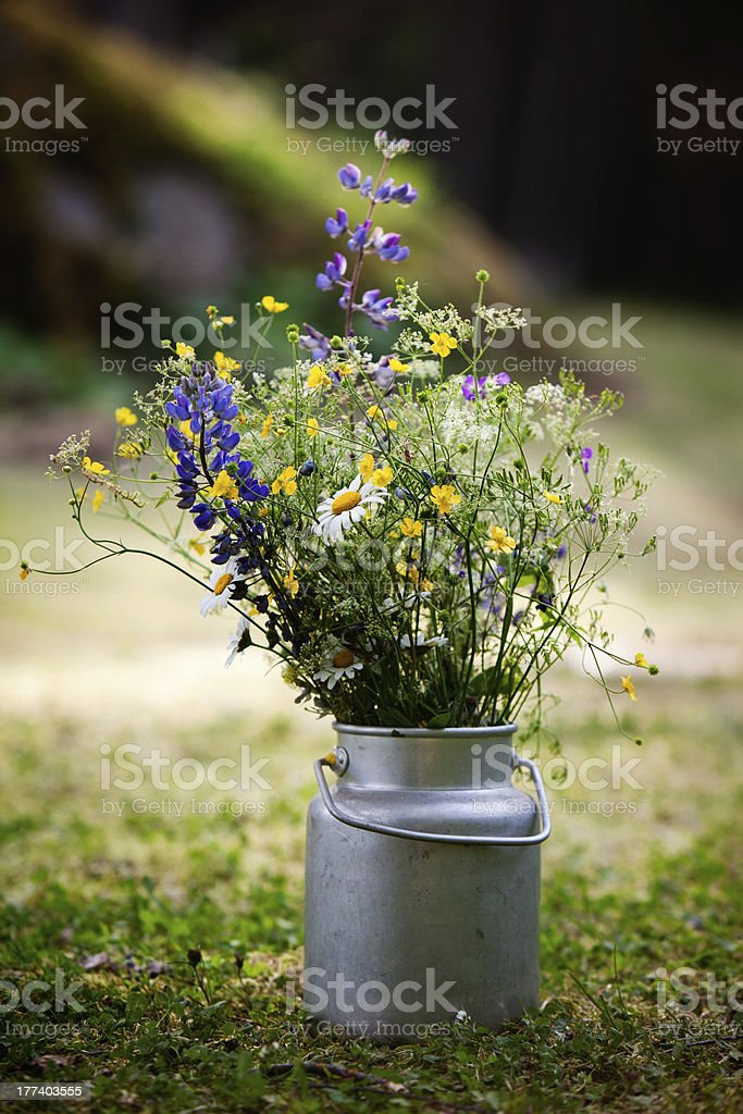 Bouquet of wild flowers royalty-free stock photo