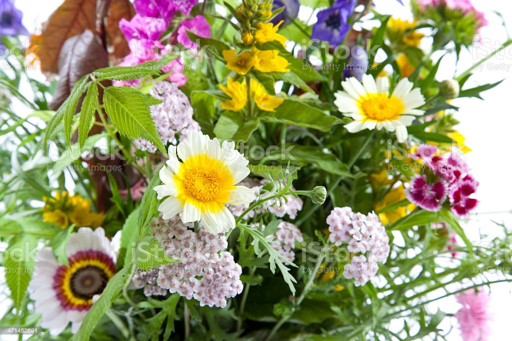 Bouquet of wildflowers royalty-free stock photo