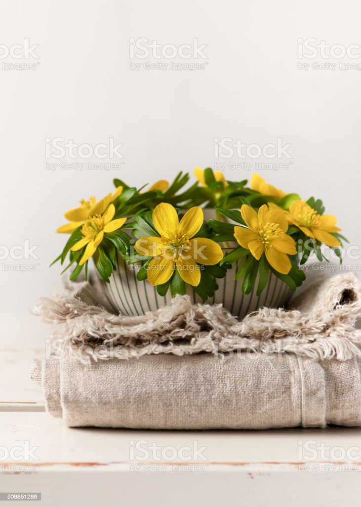 Bouquet of winter aconites in a ceramic bowl. stock photo