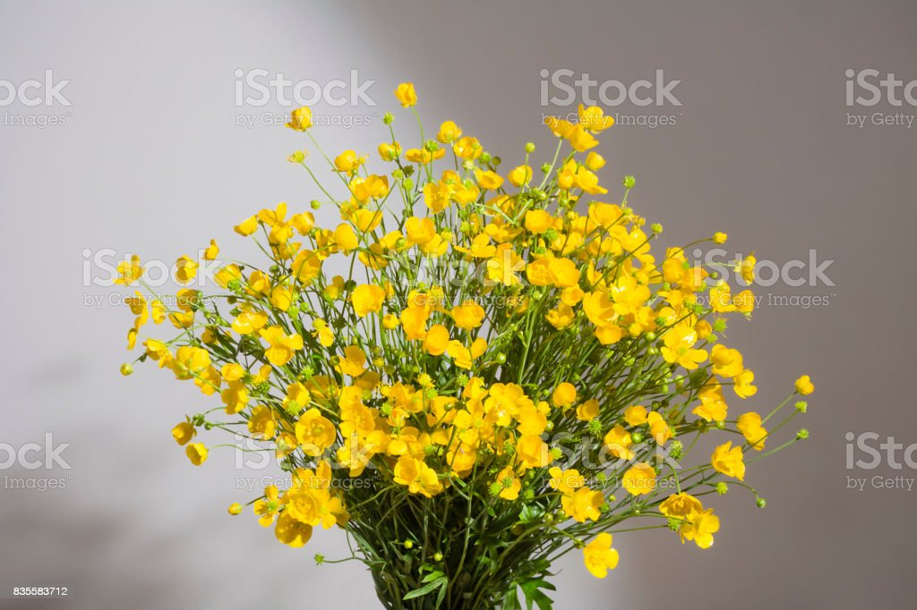Bouquet of yellow buttercaps on gray background. stock photo