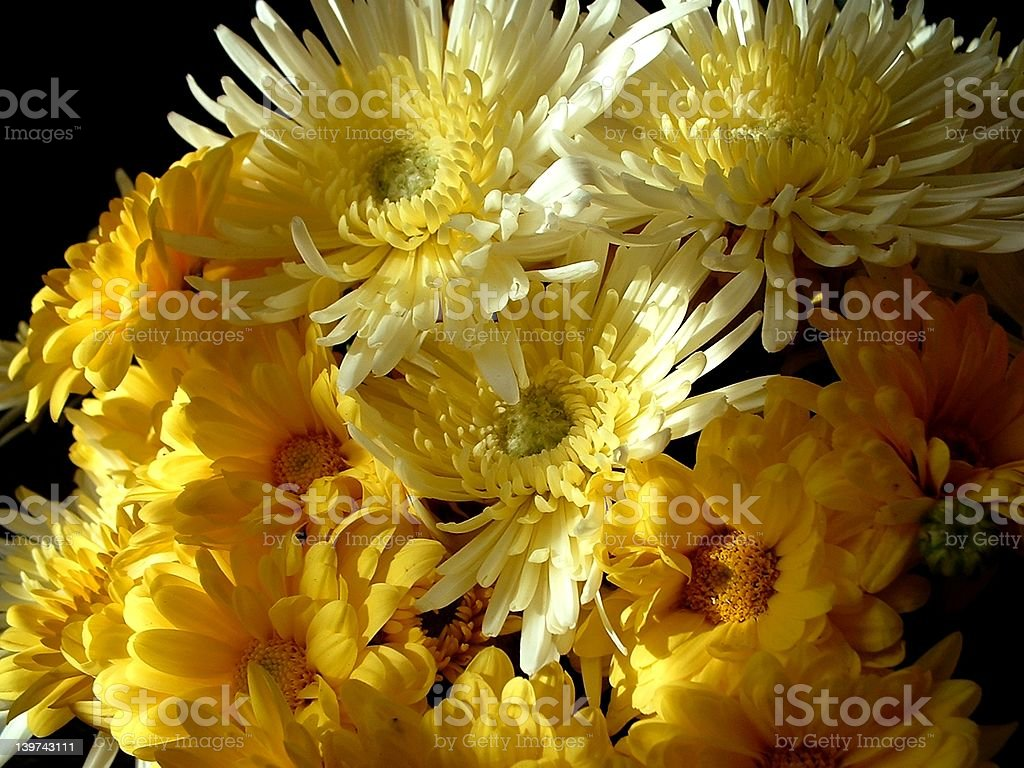 Bouquet of yellow flowers stock photo