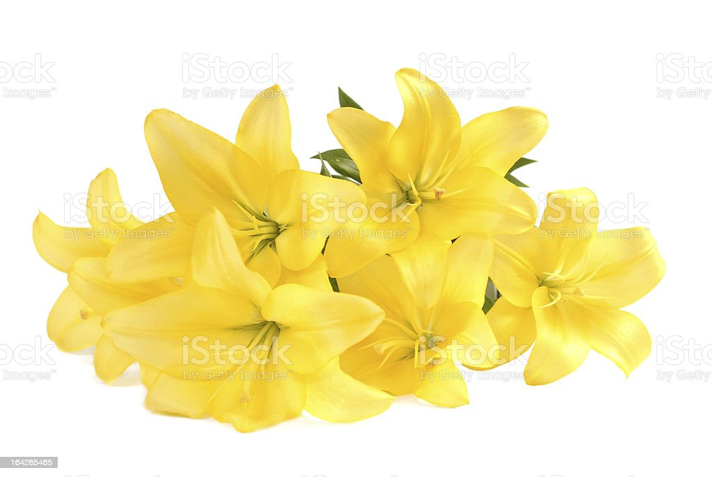 Bouquet of yellow lilies on white royalty-free stock photo