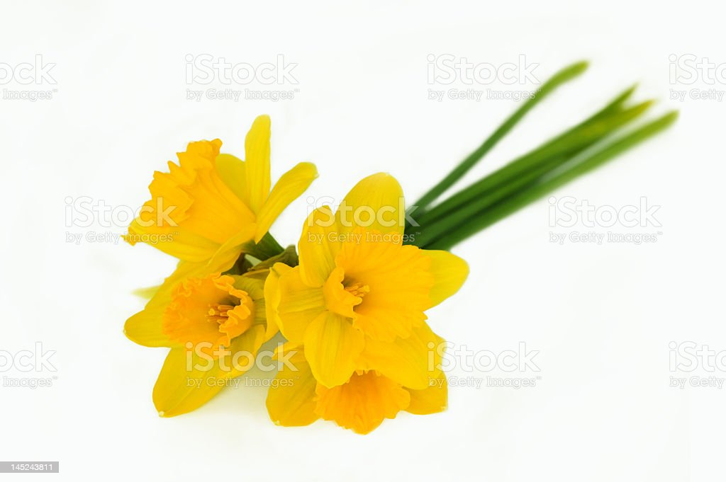 bouquet of yellow narcissus royalty-free stock photo
