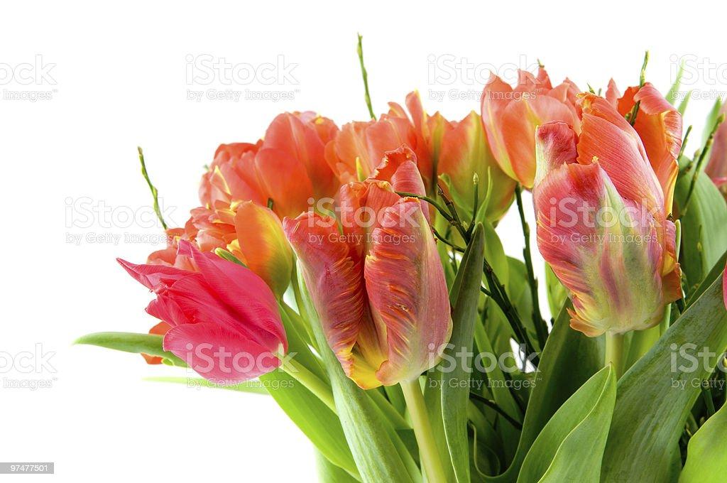 Bouquet de tulipes rouges et orange photo libre de droits
