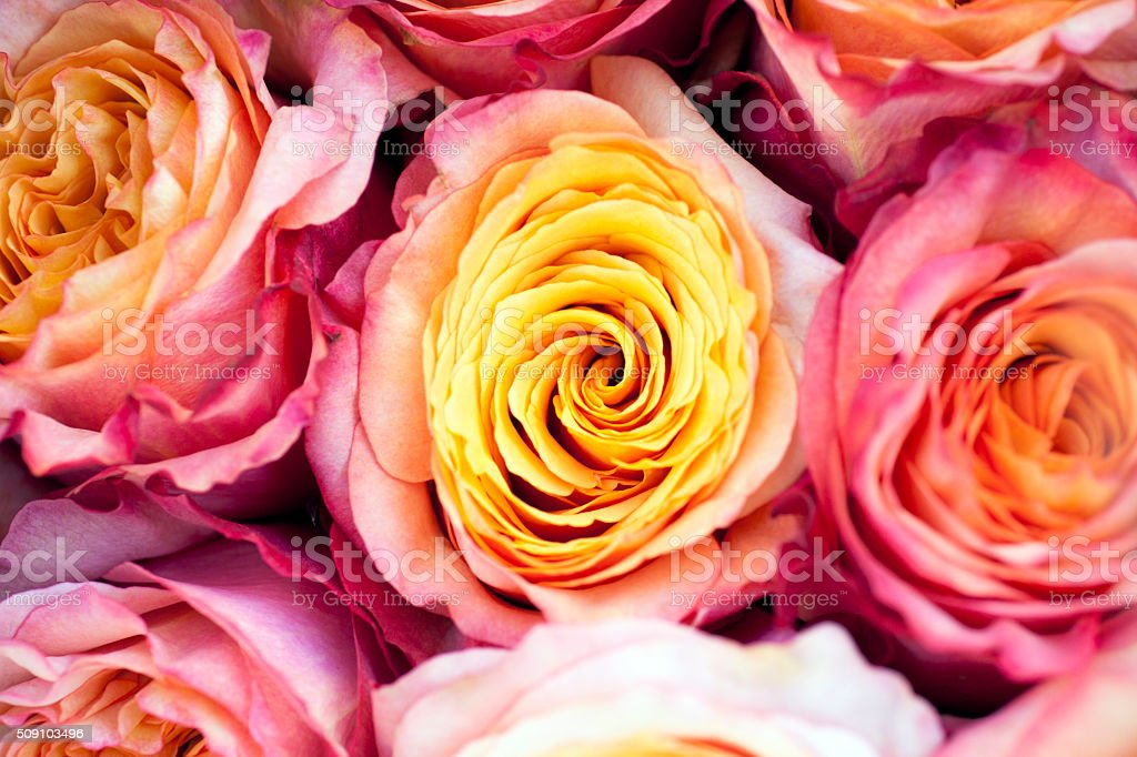 Bouquet Roses Backgrounds stock photo