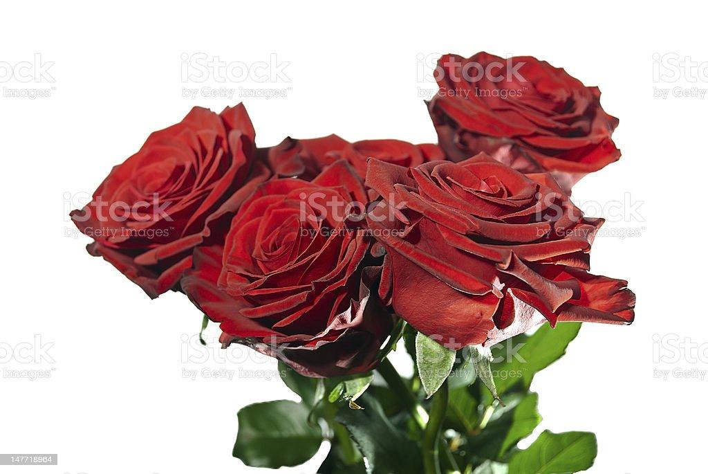 Bouquet roses stock photo