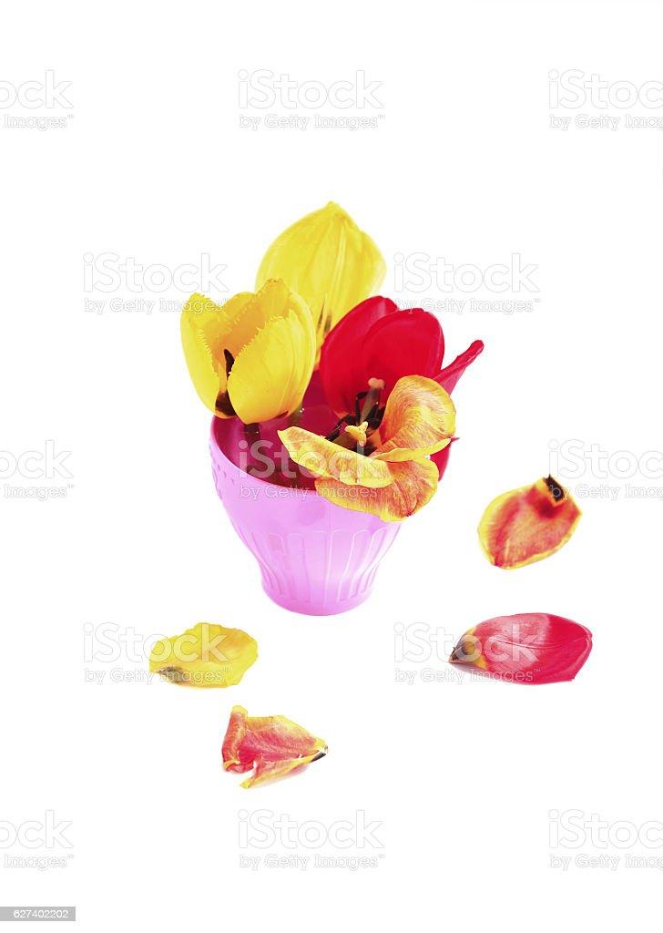bouquet tulips stock photo