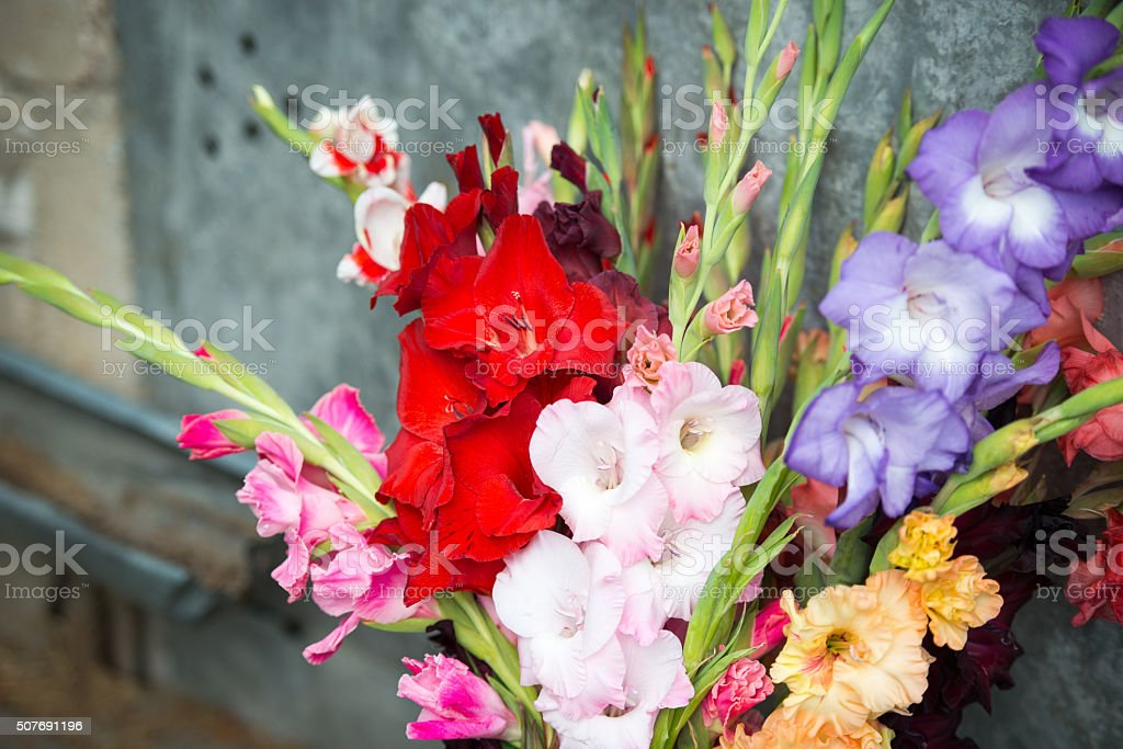 Bouquet with colorful gladiolus stock photo