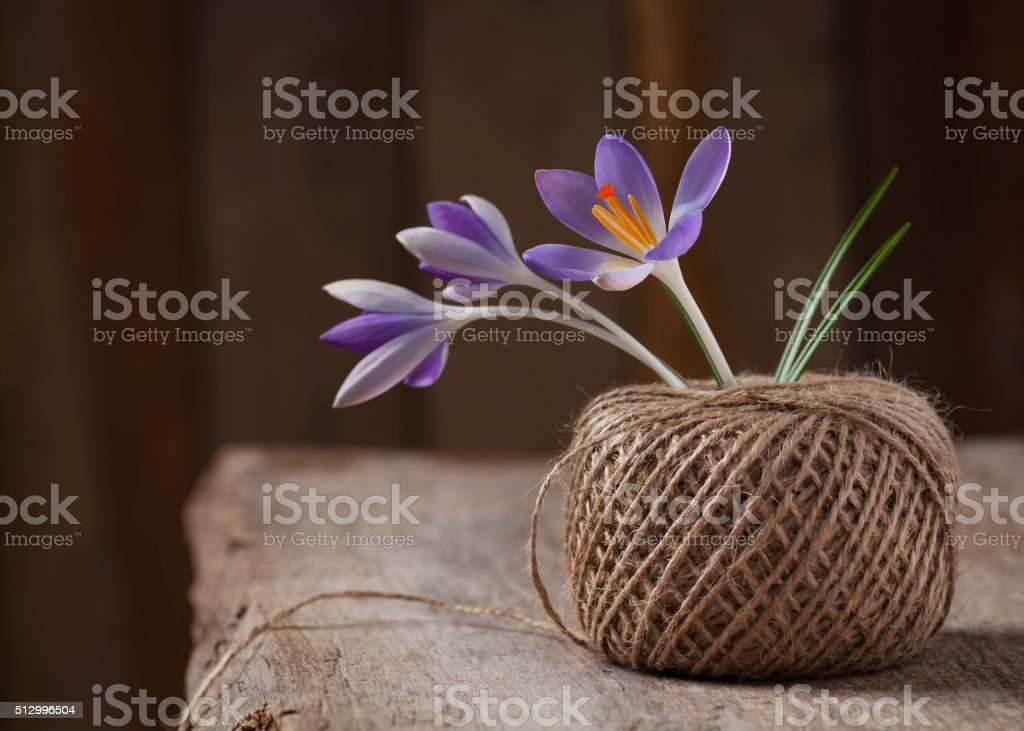 Bouquet with crocus flowers in a skein of jute twine. stock photo