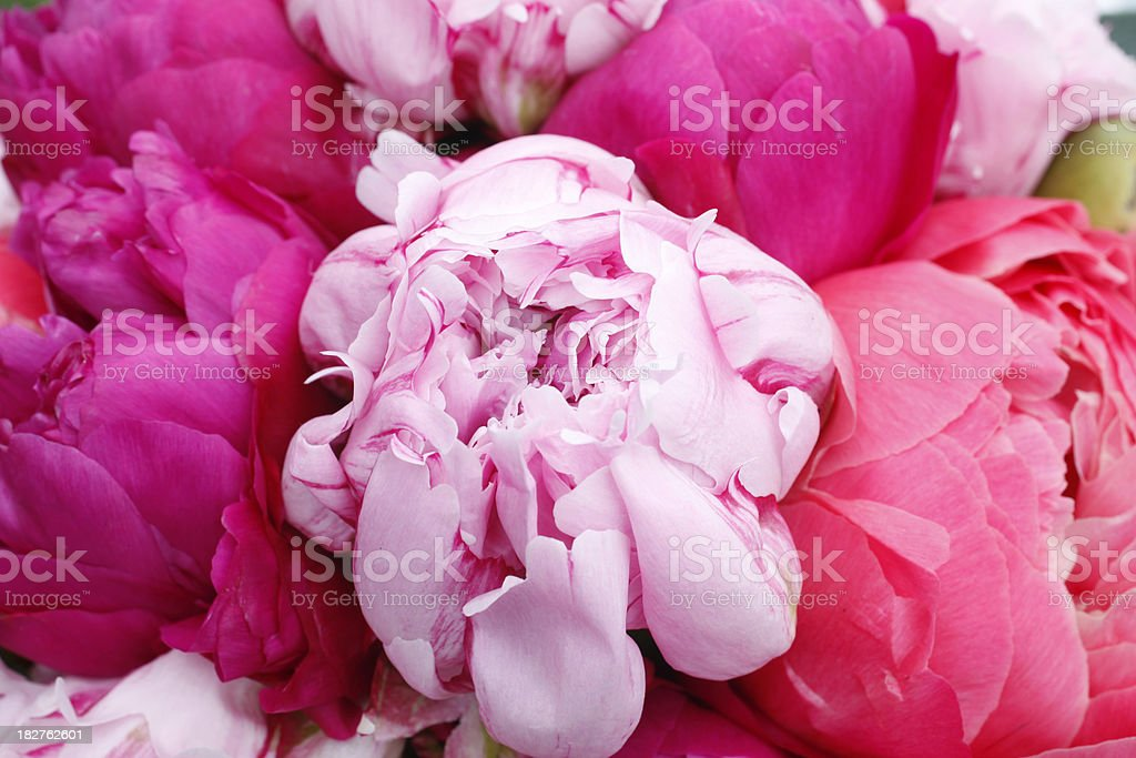 bouquet with peonies stock photo