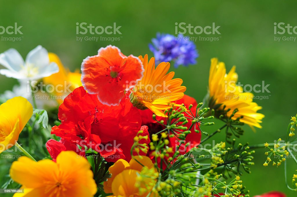 Bouquet with summer flowers stock photo