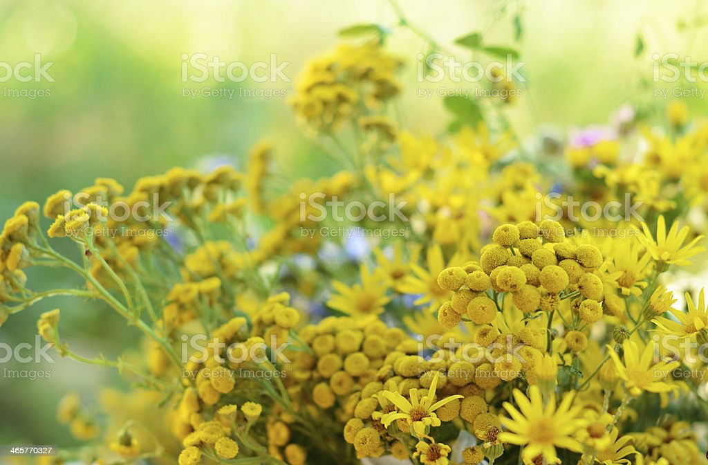 Bouquet with tansy royalty-free stock photo
