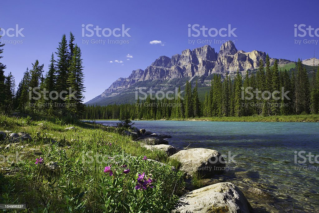 Bow River, Castle Mountain, Banff National Park Canada, wildflowers, copyspace stock photo
