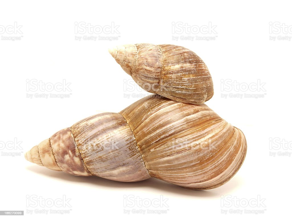 Bowl of a snail royalty-free stock photo
