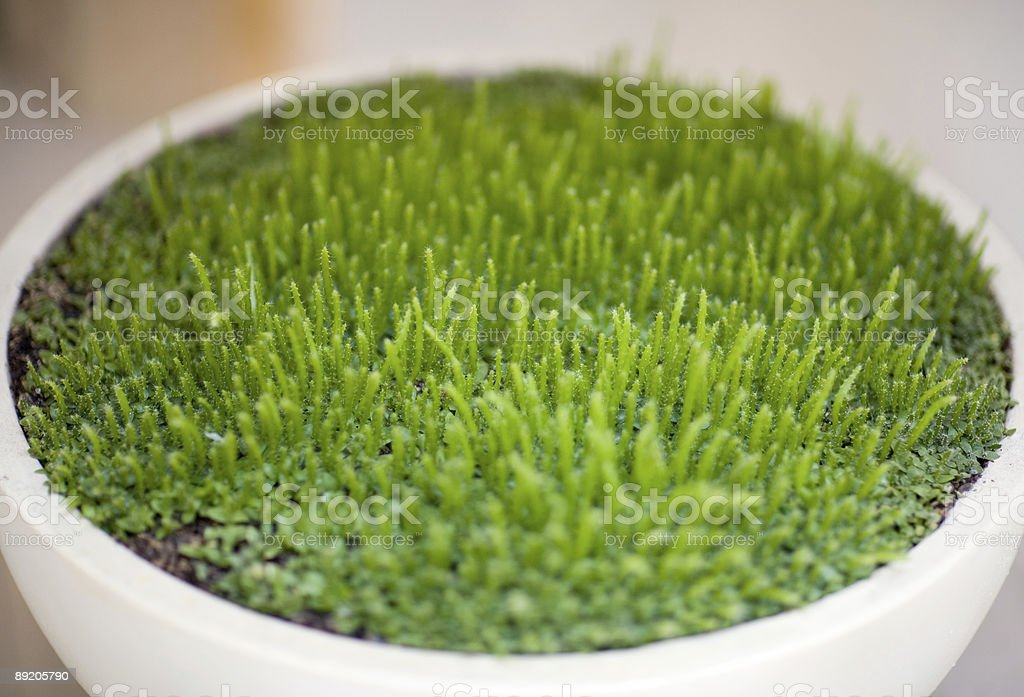 bowl of bright green Moss stock photo