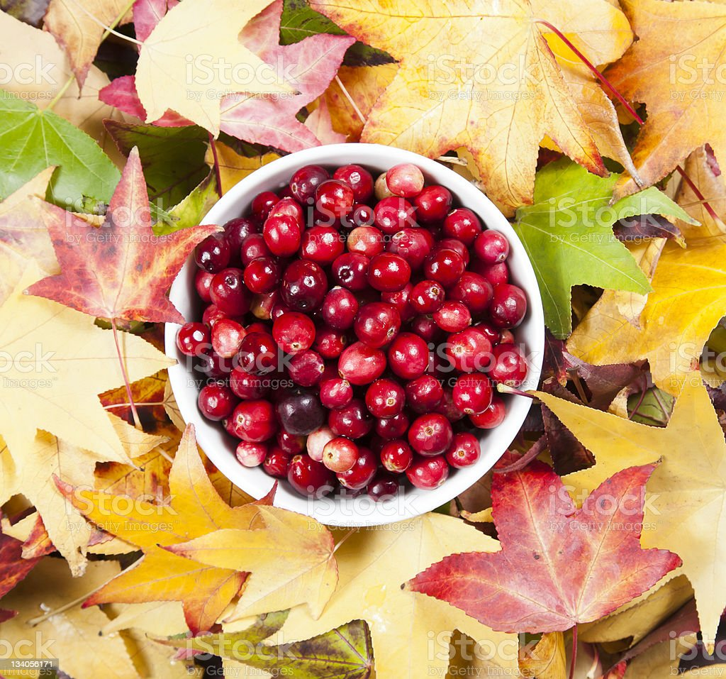 Bowl of cranberries royalty-free stock photo