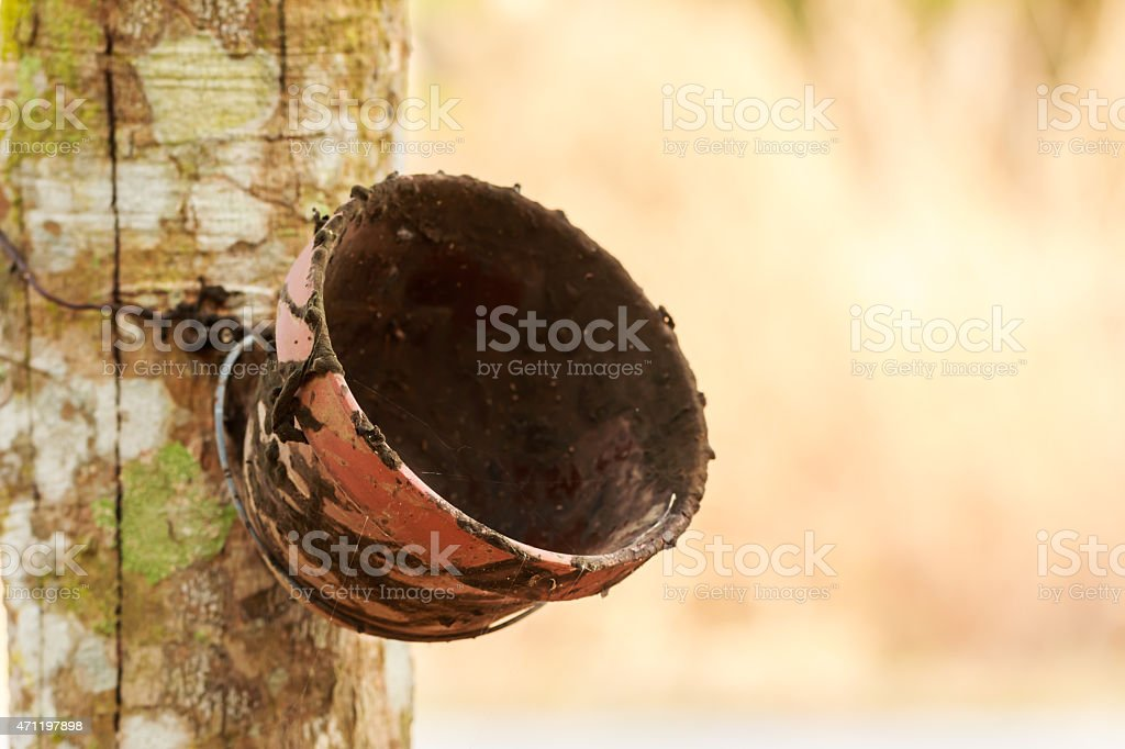 Bowl of milk rubber tree stock photo