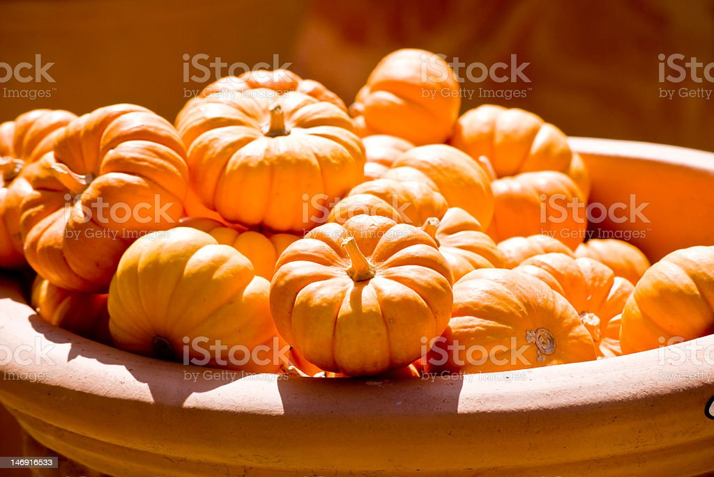 bowl of pumpkins stock photo