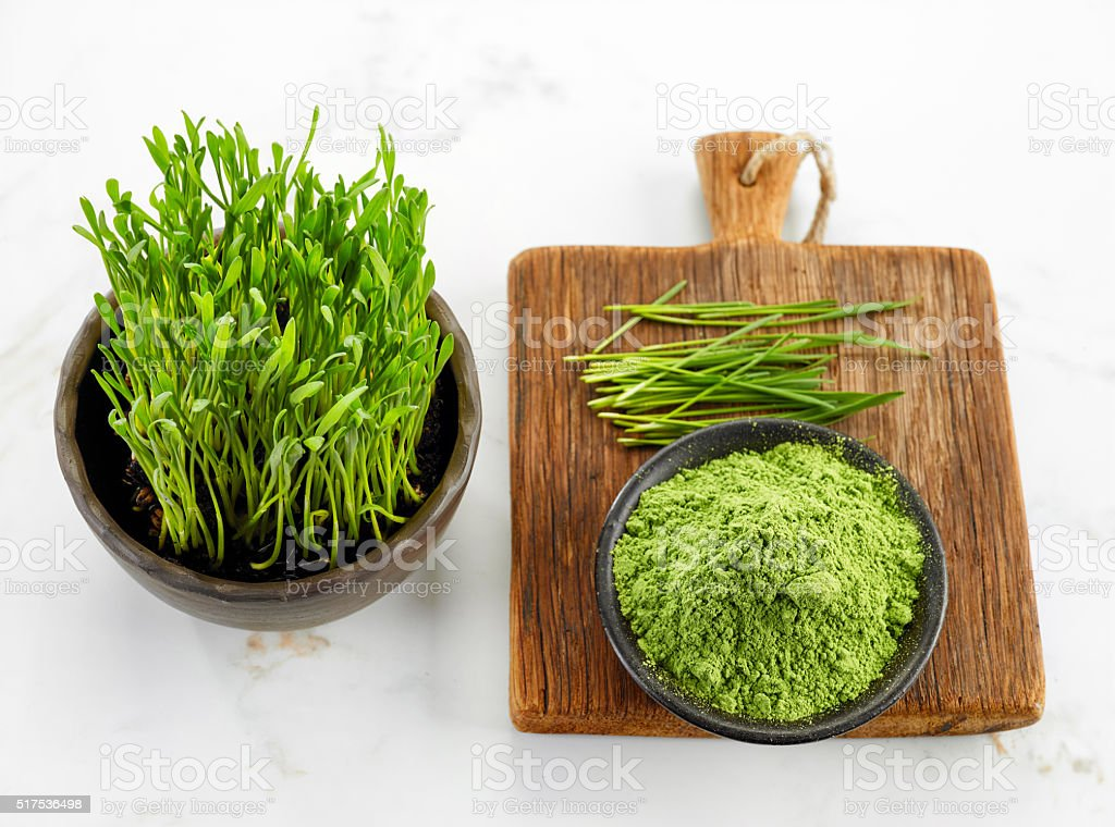 bowl of wheat sprout powder stock photo