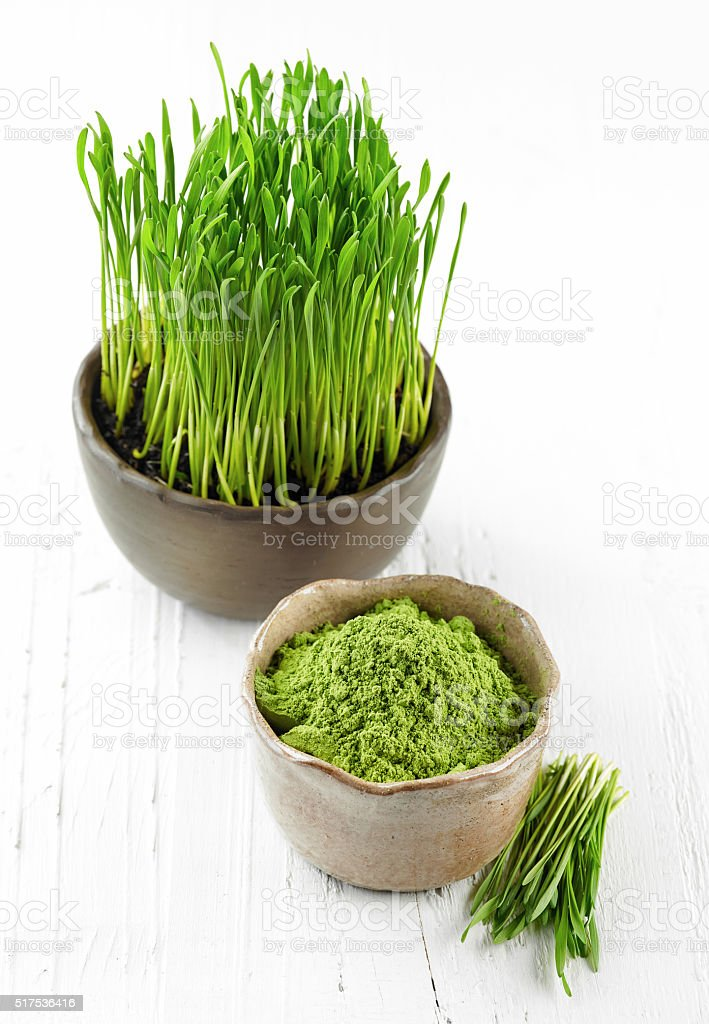 bowl of wheat sprouts powder stock photo