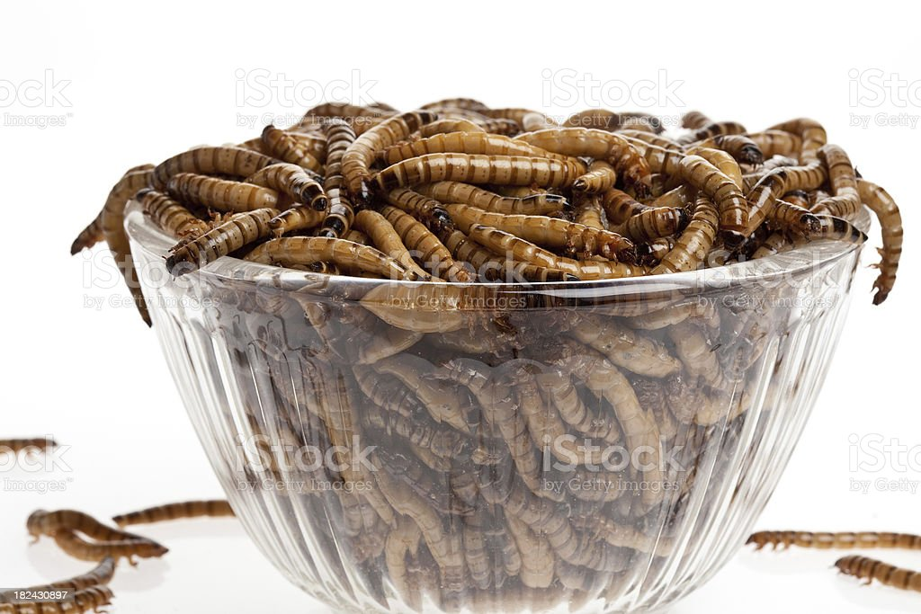 Bowl Of Worms stock photo