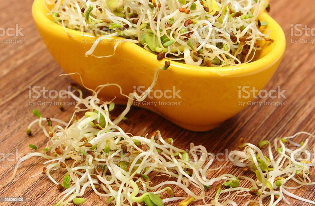 Bowl with alfalfa and radish sprouts on wooden table stock photo