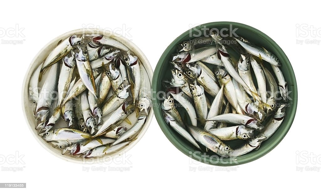 Bowls full of fishes royalty-free stock photo