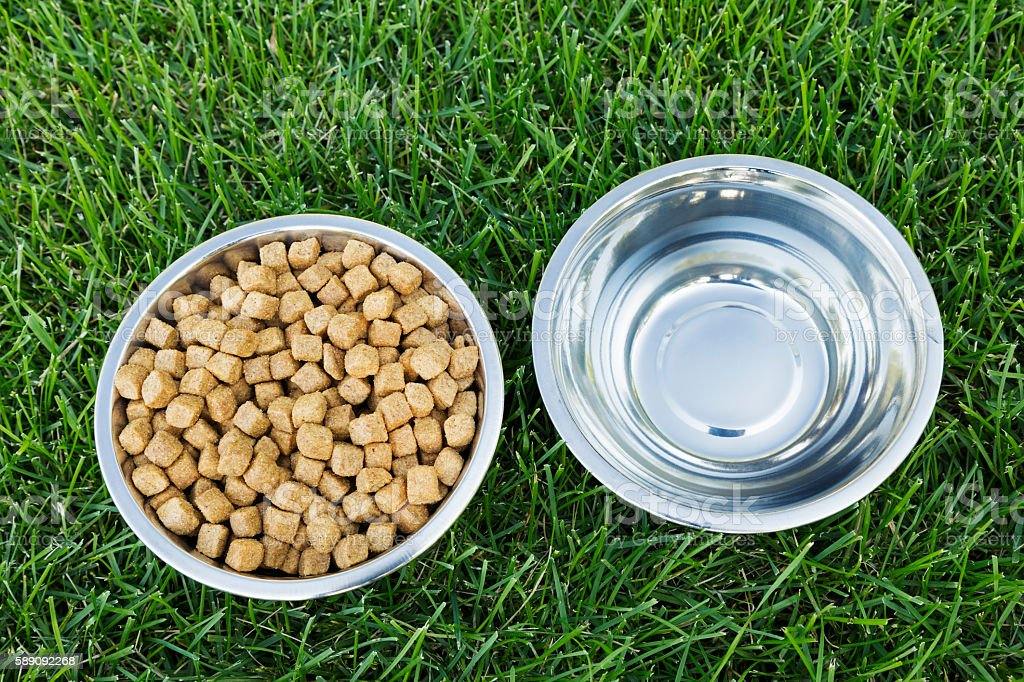 Bowls of Dog Food and Water on Green Grass stock photo