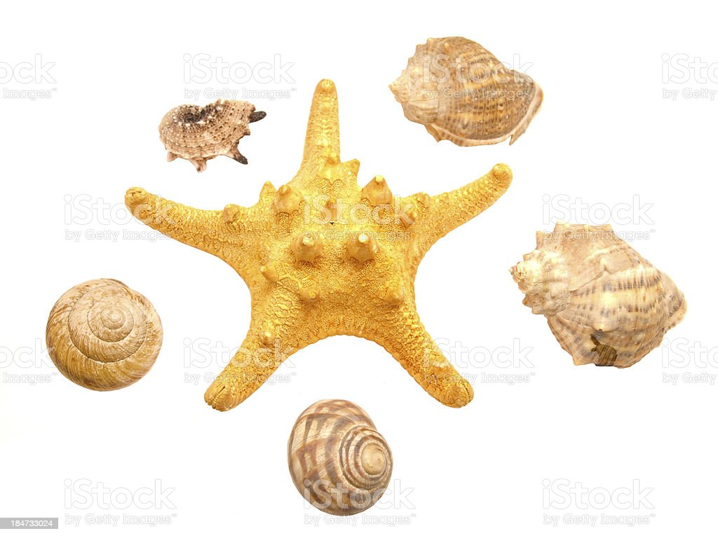 Bowls of mollusks and a starfish royalty-free stock photo