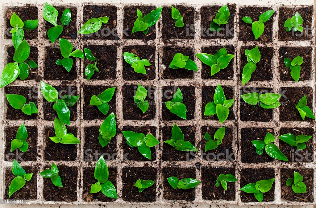 Box filled with plant seedlings royalty-free stock photo