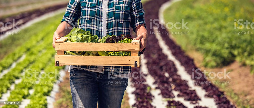 Box of fresh green vegetables stock photo