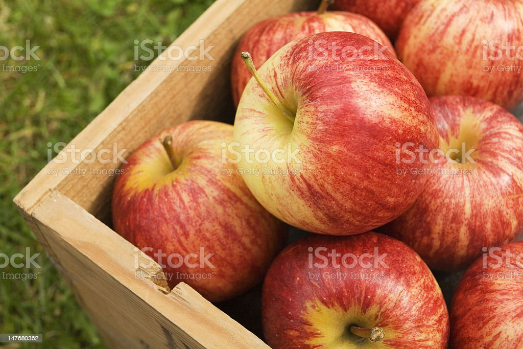 Box of red apples stock photo