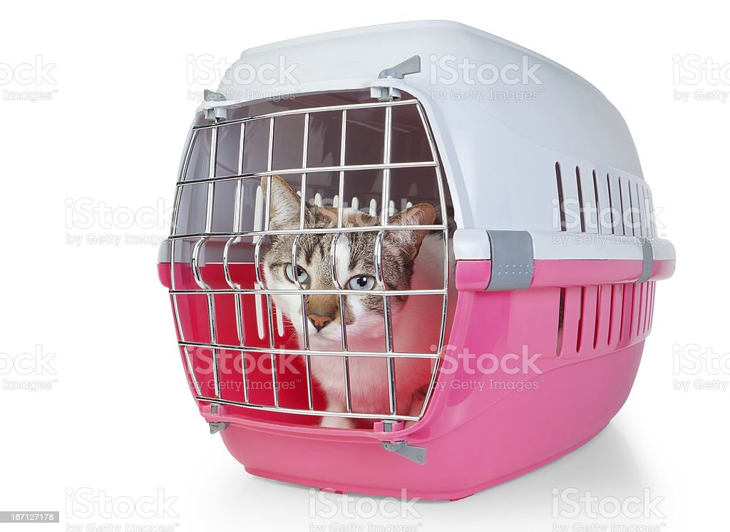 Box with a cat cage for transport. stock photo