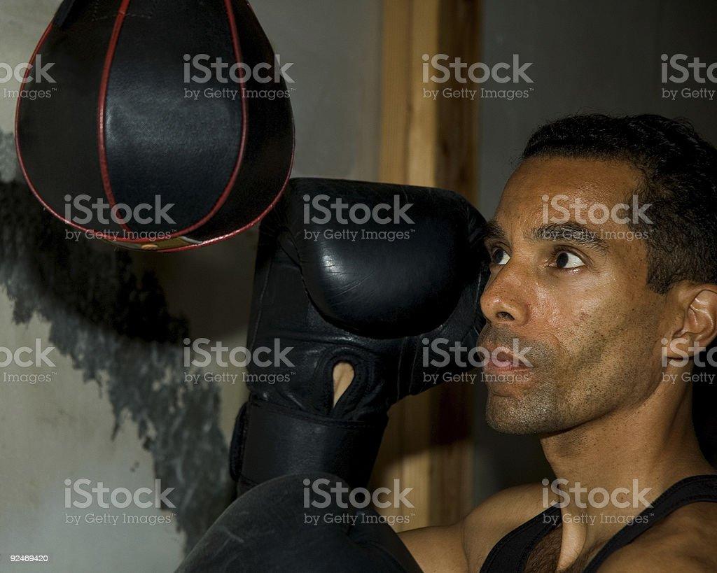 Boxer - 1 foto stock royalty-free
