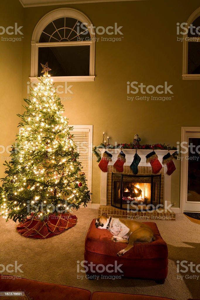 Boxer Dog Sleeping by Christmas Tree royalty-free stock photo