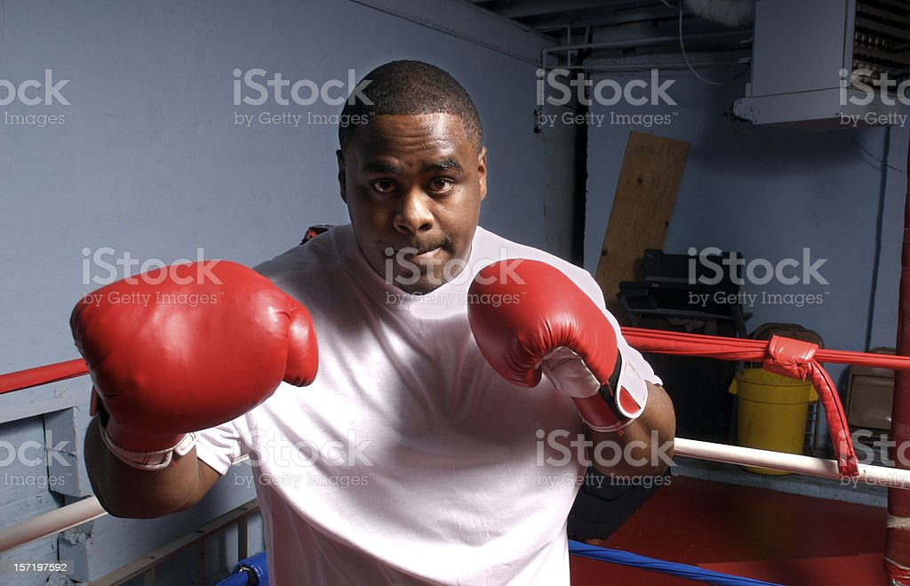 Boxer in Training royalty-free stock photo