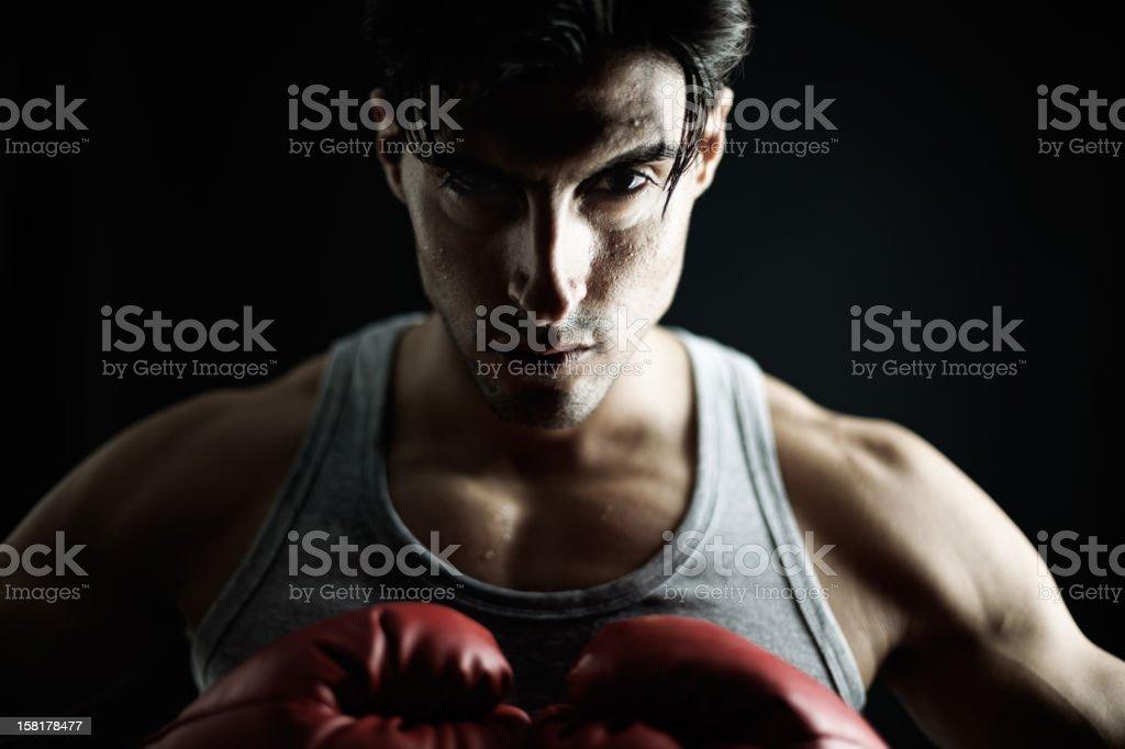 Boxer on black, male. stock photo