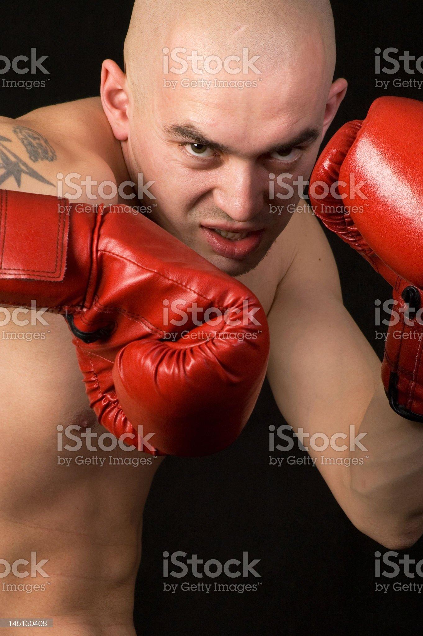 Boxer. royalty-free stock photo