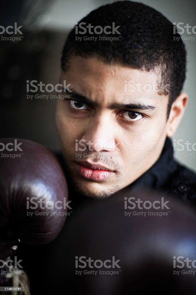 Boxer portrait royalty-free stock photo