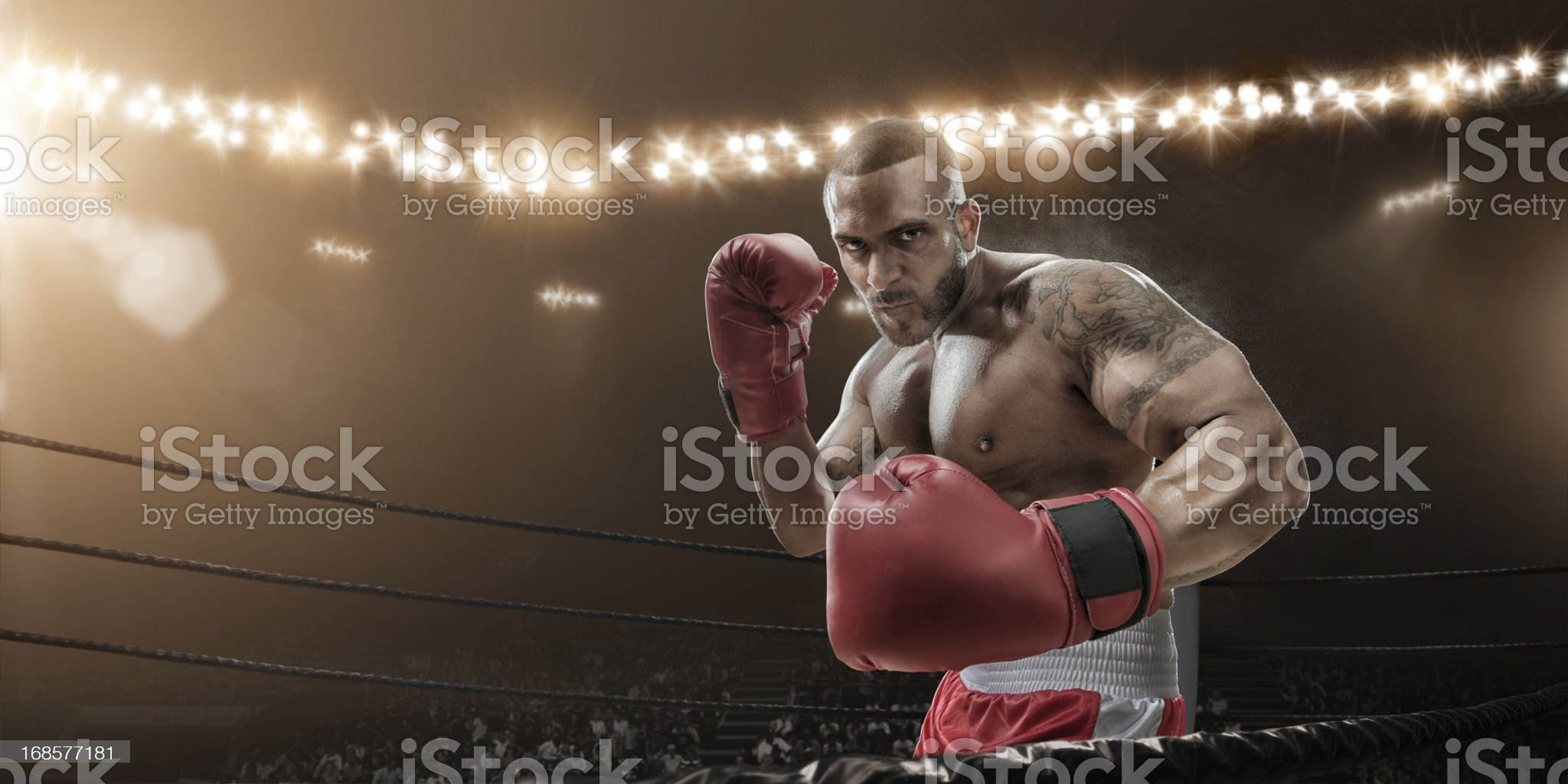 Boxer Ready To Fight royalty-free stock photo