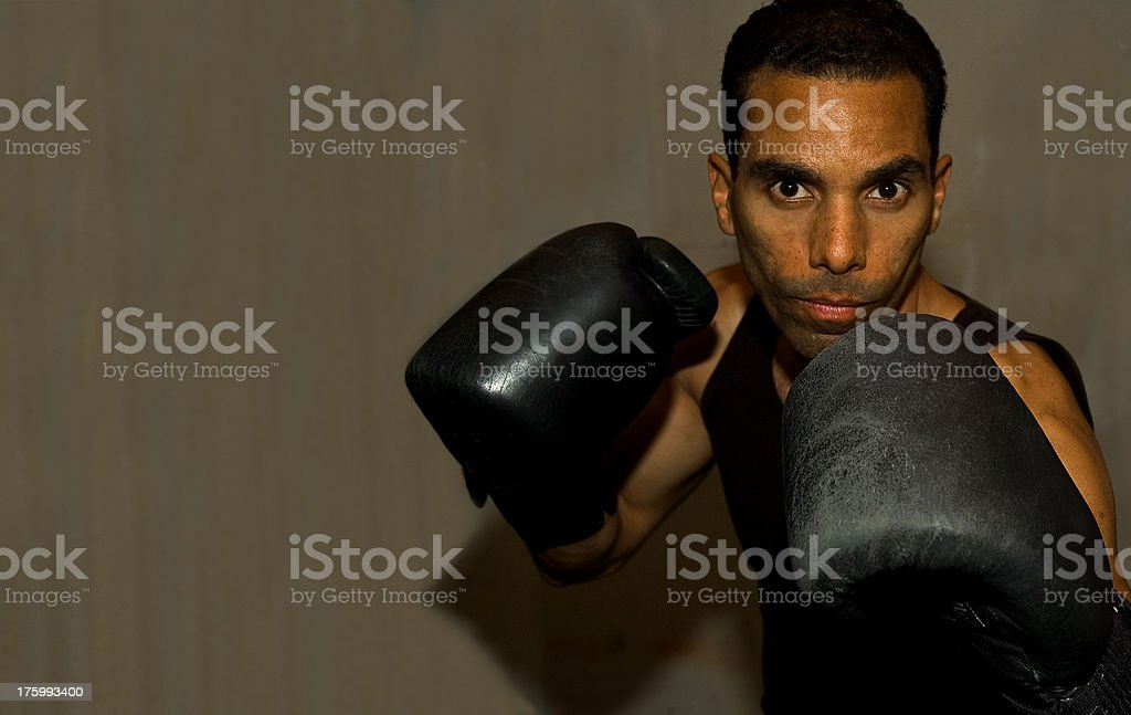 Boxer Series royalty-free stock photo