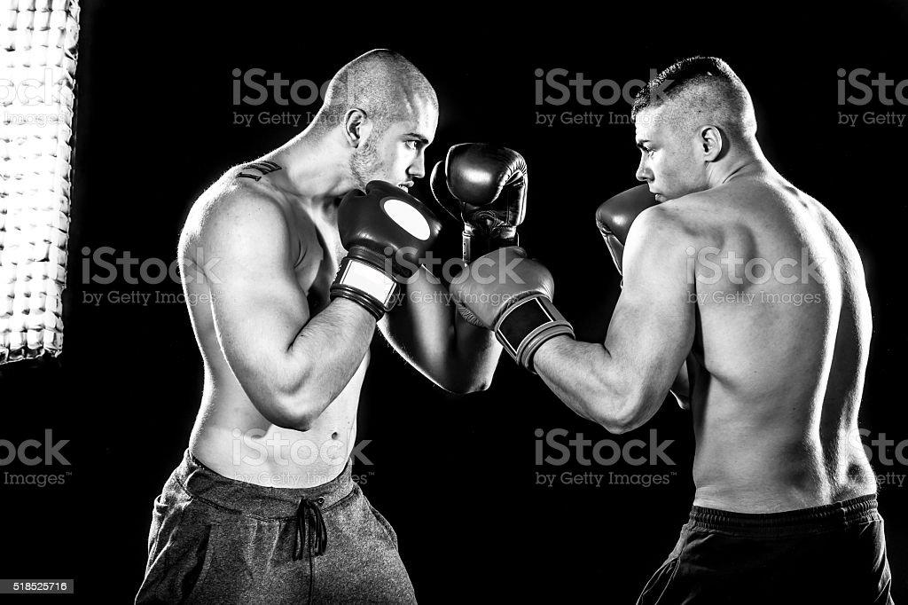 Boxers stock photo