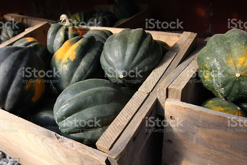 Boxes of Acorn Squash stock photo