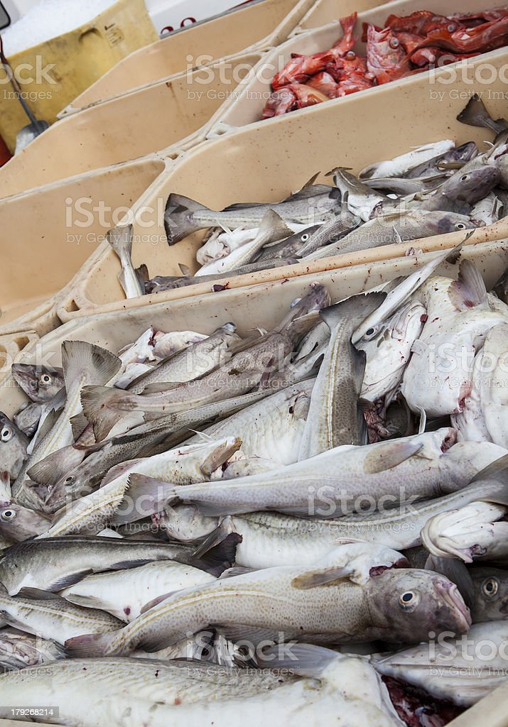 boxes of fresh fish royalty-free stock photo