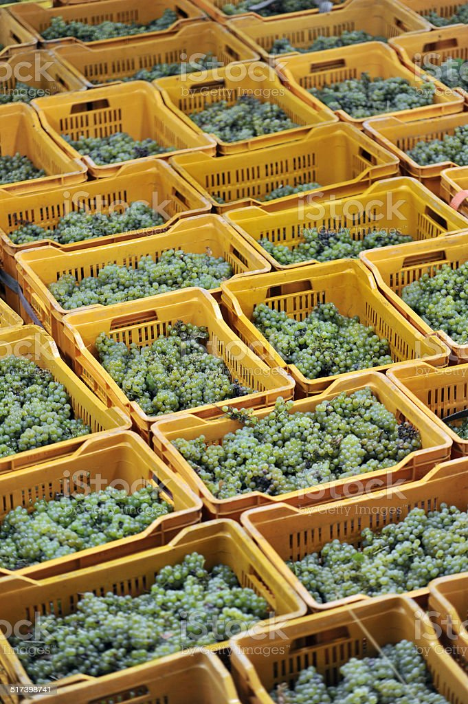 boxes of grapes from stock photo