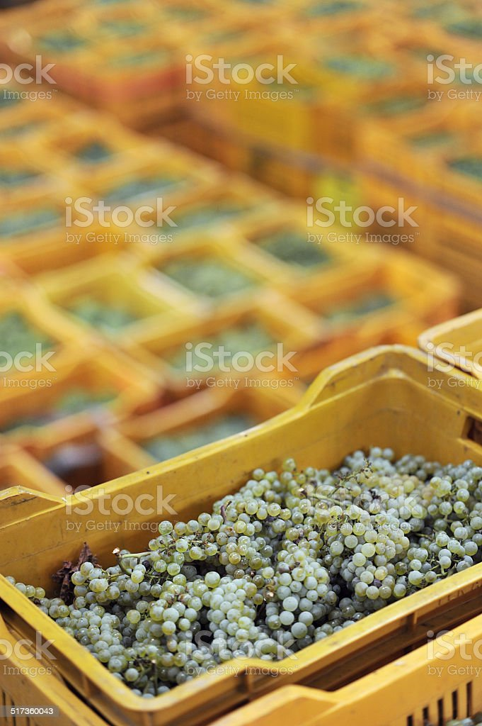 boxes of grapes in the foreground vertical photo stock photo