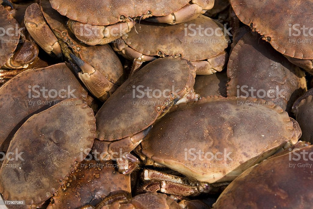 Boxful of Cromer crabs royalty-free stock photo