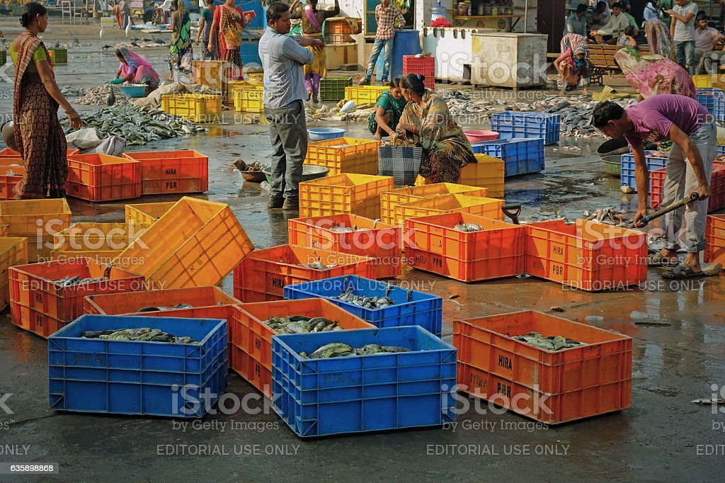 Boxing the catch for market stock photo