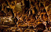 Boxwork in Wind Cave National Park